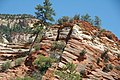 Minor faults in Navajo Sandstone (Lower Jurassic), Clear Creek Valley, White Cliffs, Zion National Park, sw Utah 3.jpg