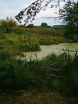 Home of water birds in wetland near Tuchlovice, Czech Rep.