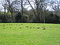 Molehills near Weatheroak Hall - geograph.org.uk - 154036.jpg