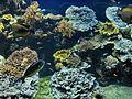 Monaco.Musée océanographique016.jpg