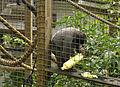 Monkey Sanctuary 7.jpg
