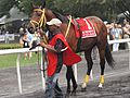 More than a Reason at True North Stakes 03.jpg