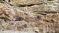 Morrison - Dinosaur Ridge 19-09-2014 12-44-15 2.JPG