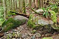 Mount Seymour Provincial Park, BC (DSCF9083).jpg