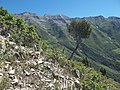 Mount Timpanogos from Dry Canyon Trail - panoramio.jpg