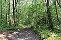 Mountain Road (Johnstown Highway) - panoramio (50).jpg