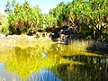 Mt Isa Museum Pond - panoramio.jpg
