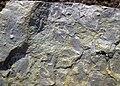 Mudchip breccia (Vinton Member, Logan Formation, Lower Mississippian; Mohawk Dam roadcut, northwest of Nellie, Ohio, USA) 4 (33050181991).jpg