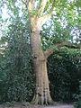 Museum Insel Hombroich - huge tree.jpg