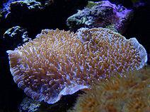 Mushroom Coral Morning.jpg