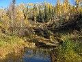 Muskeg Creek1.jpg