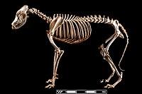 "Mutt dog. ""Canis lupus familiaris"" 01.jpg"