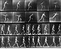 Muybridge disk step walk.jpg