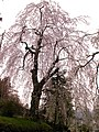 Myogi Shrine - panoramio.jpg