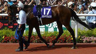 Nakayama Festa Japanese-bred Thoroughbred racehorse