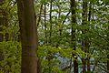 Nationalpark Eifel Ausschnitt.jpg