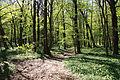 Nationalpark Hainich-Erlebnispfad Feensteig-by-Leila-Paul-IMG 3975 05.JPG