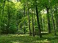 Nationalpark Hainich craulaer Kreuz 2020-06-03 31.jpg