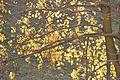 Natura Ladislav Kopunec Univerzon Nature Photo original Law Czech Republic 258743 Art w.jpg