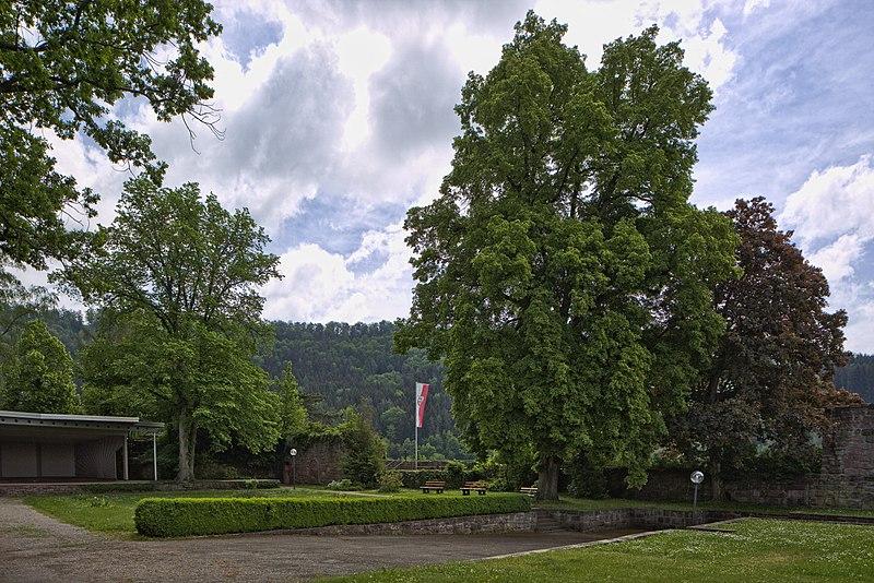File:Naturdenkmal Zwei Alte Linden, Kennung 82350800009, Schloßruine, Wildberg 08.jpg