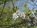 Nature in Smolensk - 12.jpg