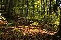 Nature reserve Ptaci stena in autumn 2011 (14).JPG