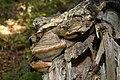 Nature reserve Ptaci stena in autumn 2011 (8).JPG