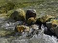 Naturpark Ötscher-Tormäuer - klares Wasser im Ötscherbach.jpg
