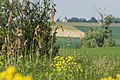 Naturschutzgebiet Hahnheimer Bruch Wegrand.jpg