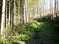 Naturschutzgebiet Mittleres Ourtal - geo.hlipp.de - 6801.jpg