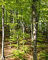 Naturschutzgebiet Nr. 158 Greifenstein (Gebiet an der Burg Greifenstein) 1 Sublocation DE-TH WDPA ID 163316 , unterhalb Kesselwarte.jpg