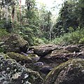 Nerang River, Springbrook National Park, Gold Coast Hinterland, Queensland, Australia.JPG