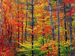 Mange plejer at besøge New Hampshire for at se delstatens berømte efterårsfarver.