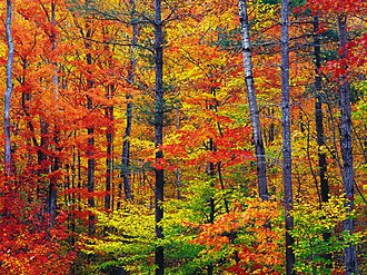 Autumn in New England - New Hampshire