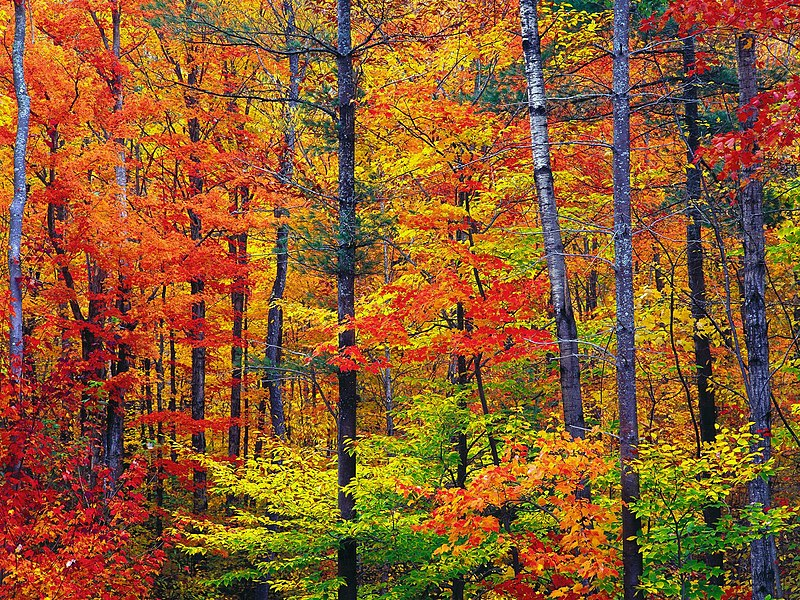 Couleurs d'automne du New Hampshire source Wikipedia