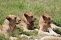 Ngorongoro 2012 05 30 2600 (7500981092).jpg