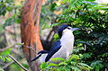 Night heron childrens park guindy.JPG