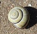 Noordwijk - Yellow Snail.jpg