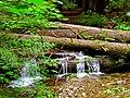 North Cascades National Park (9290018417).jpg