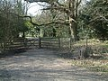 North Downs Way West of Colley Hill - geograph.org.uk - 370241.jpg