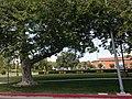 Northridge, Los Angeles, CA, USA - panoramio (75).jpg