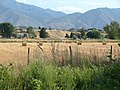 Northwest across hay field in Spanish Fork River Bottoms, Jul 15.jpg