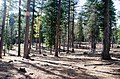 OCHOCO-Sustainability & Resiliency Camp-008 (26434214805).jpg