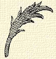 Olajág (heraldika).PNG