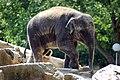 Olifant (4149771763).jpg