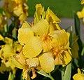 Ontario Flowers (12) (22782111853).jpg