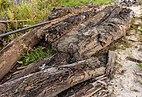 Opgebaggerd hout (Langweerderwielen) 01.jpg