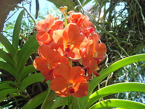 American Orchid Society - Image: Orchids at American Orchid Society, Delray Beach