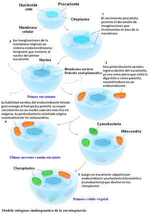 ENDOSIMBIOSIS TEORIA LA PDF DE