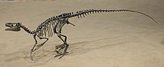 Ornitholestes Royal Tyrrell 2.jpg